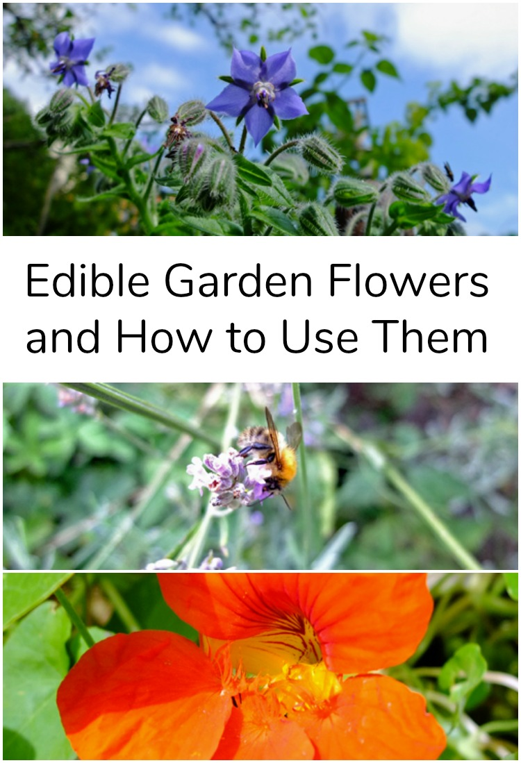Collage of edible garden flowers.