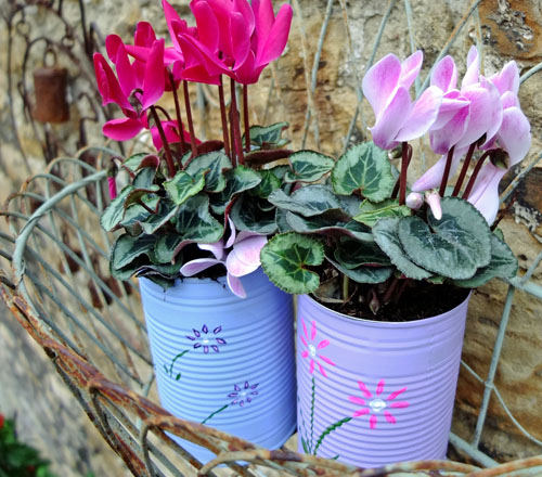 Flowers growing in hand-painted tins, sat outside in a metal wall basket.