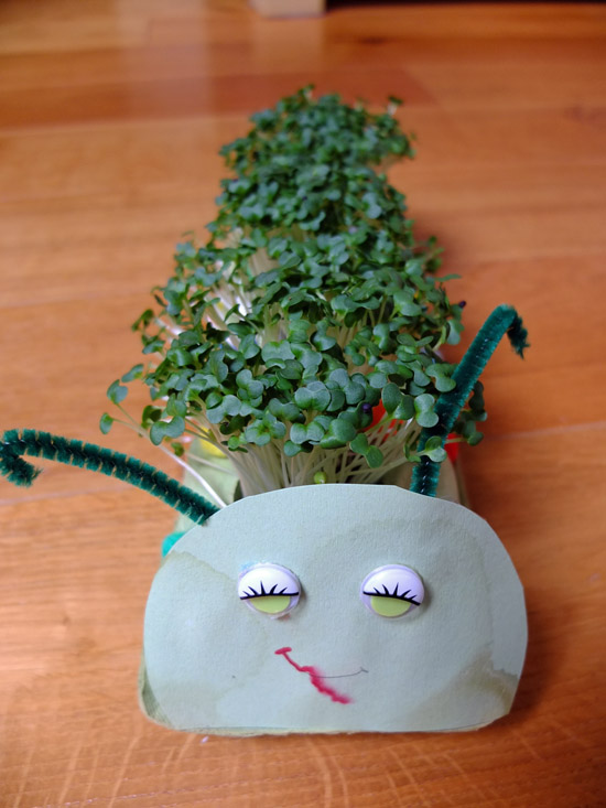 cress caterpillar by thinlyspread.co.uk