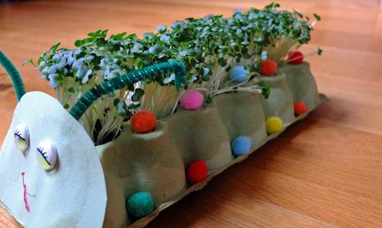 Cress caterpillar made from an egg box.