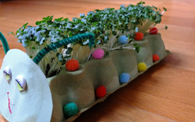 How to Grow Cress Caterpillars