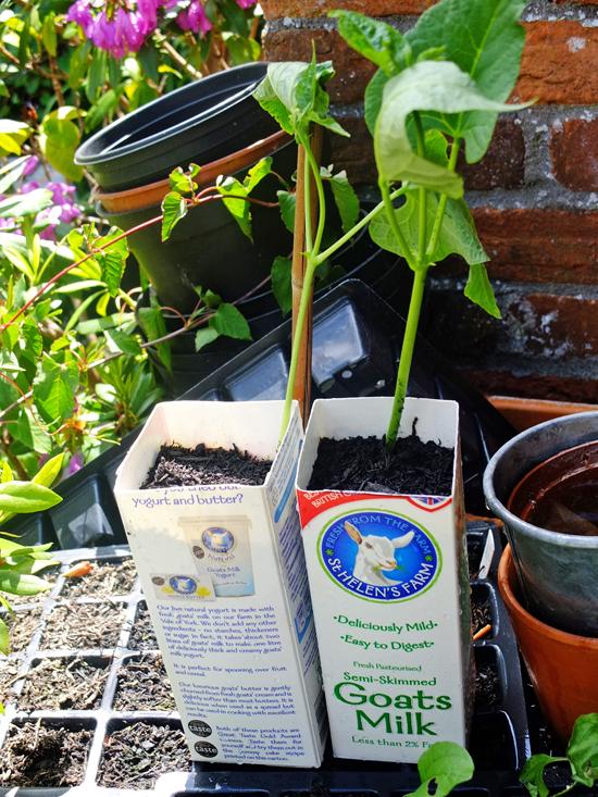 milk carton plant pots