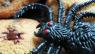 Spooky Spider Cookies – Halloween Baking