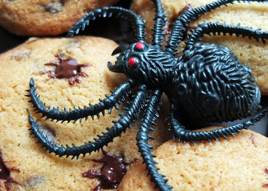 Chocolate chip cookies with a toy spider.