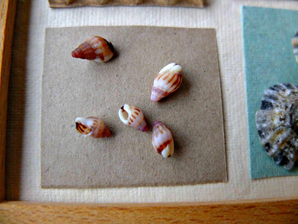 beach crafts, seashell crafts