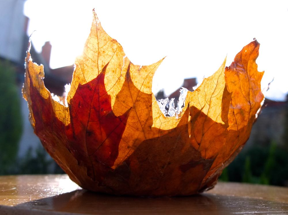 Autumn leaf bowl, lit from behind by sunlight.