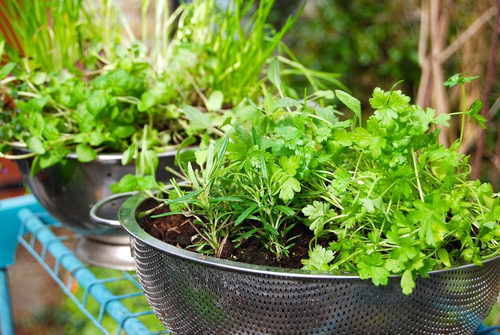 DIY Herb Planters using collanders.