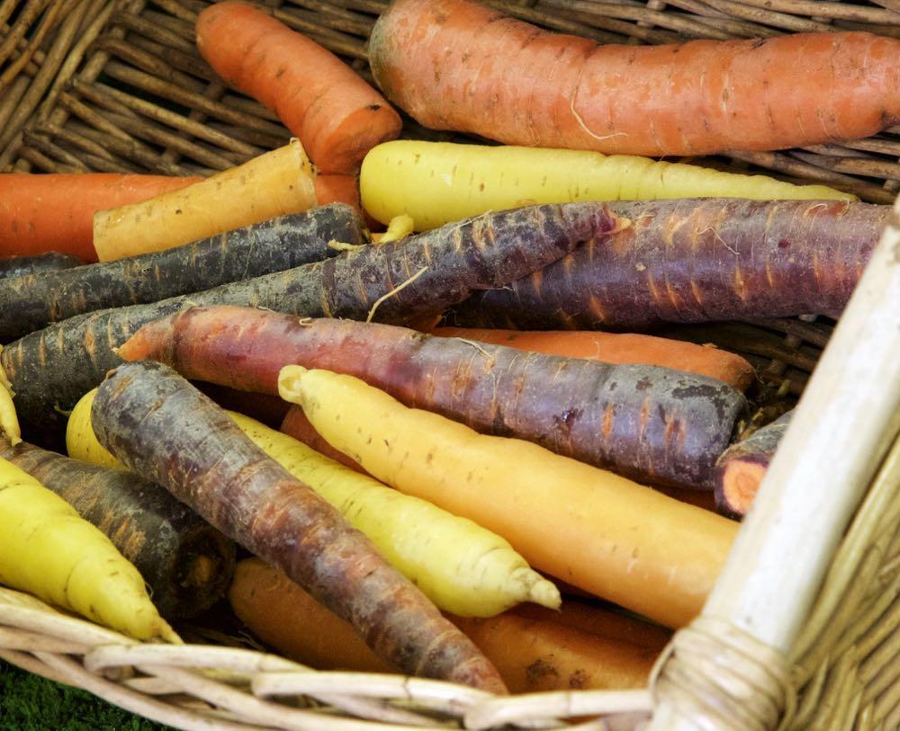 Organic carrots, Goldhill Organic Farm.