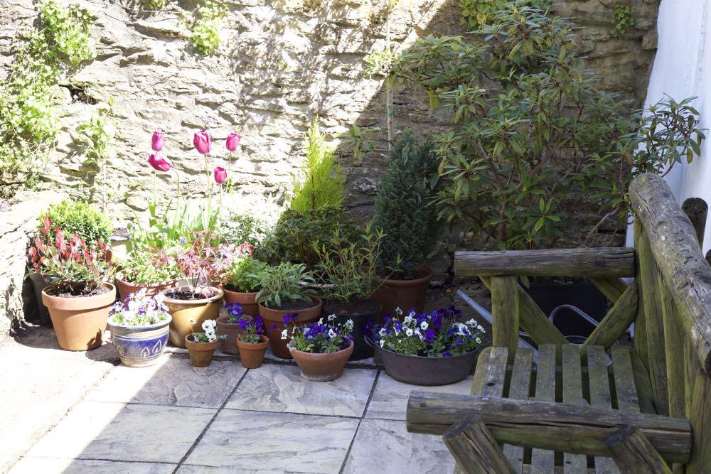 Patio Garden Planting