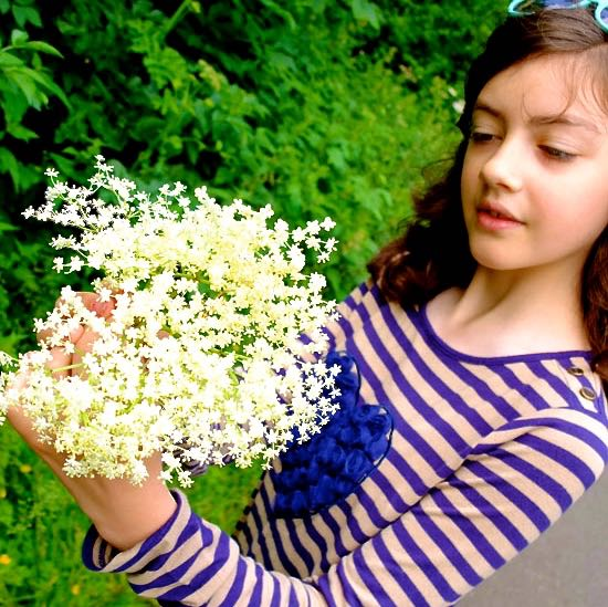 Young girls foraging for elderflowers in June.