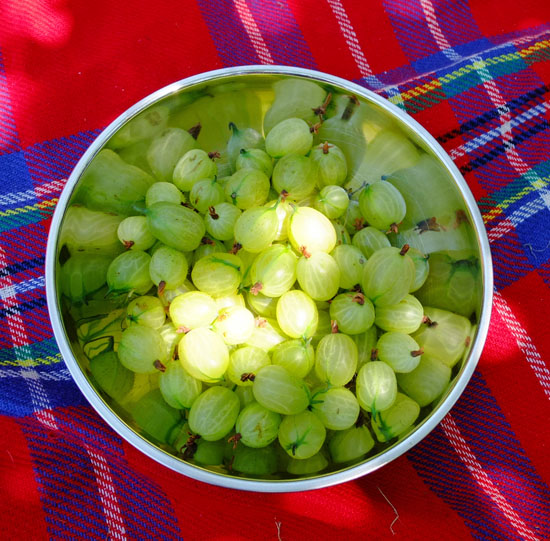 A bowl of Gooseberries on a picnic mat.
