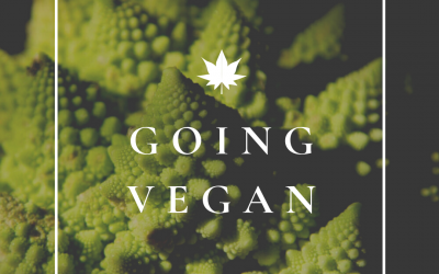 Beginners Guide To Going Vegan